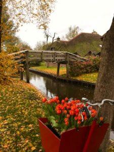 Tulips in Giethoorn